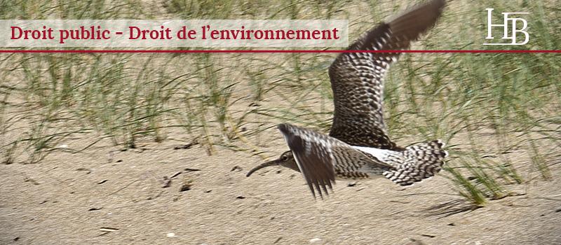 droit de l'environnement, droit public, courlis cendré, chasse, consultation du public