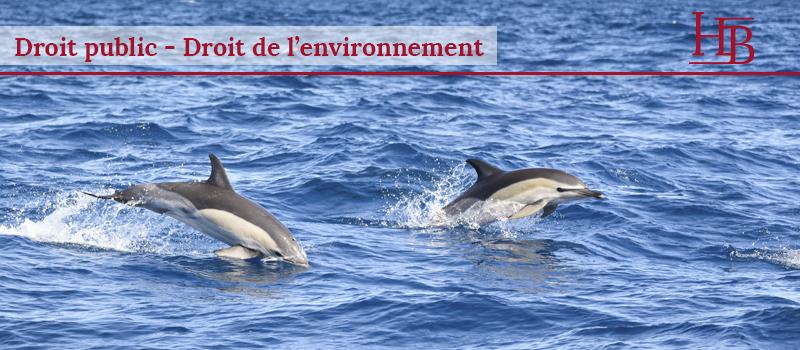 bras-avocats-montpellier-droit-public-protection-dauphins